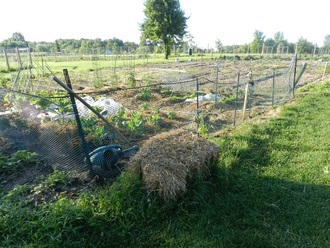 Community Garden at Karner Farm in West Bloomfield